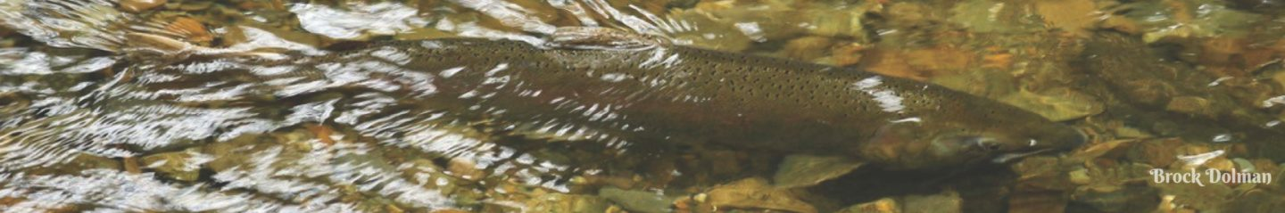 Russian River Coho Water Resources Partnership